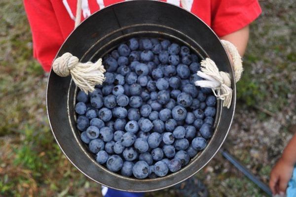 blueberries_thumb[19]
