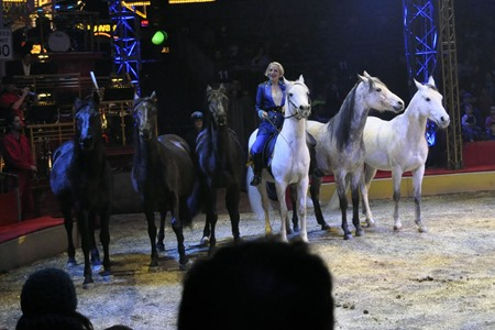 circus016